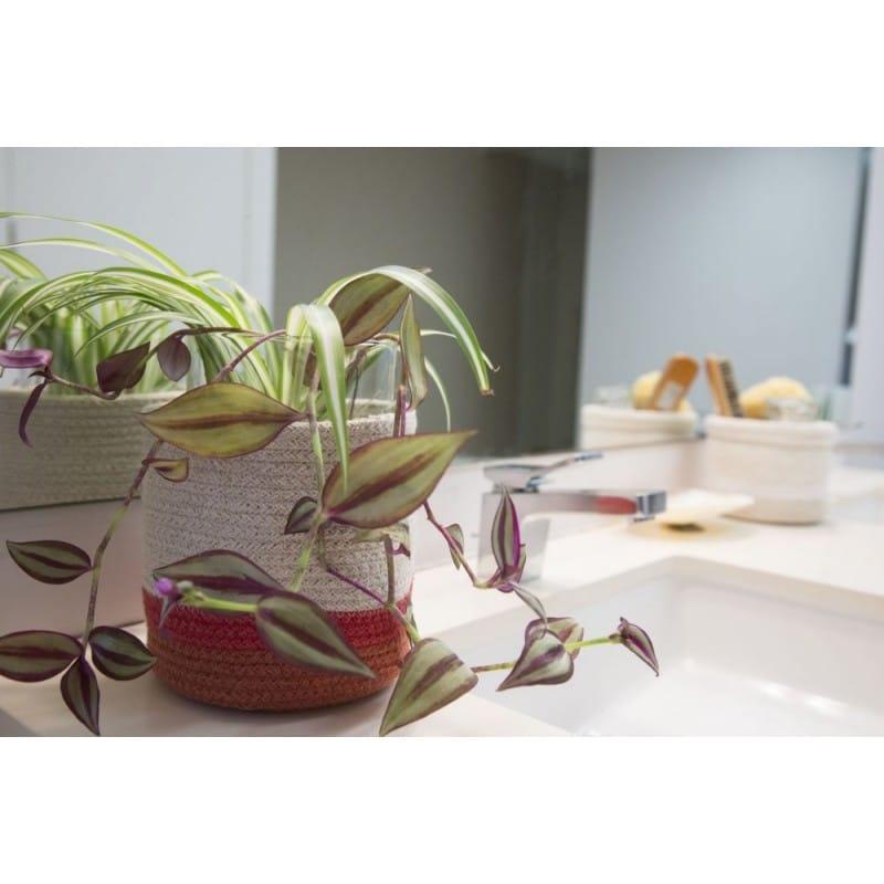 Basket Mini Tricolor Natural 4